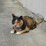 尾花 - 近所ではネコちゃんがひなたぼっこ