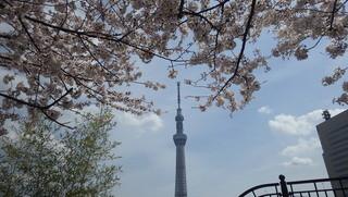 カフェ ウィ - スカイツリー&桜