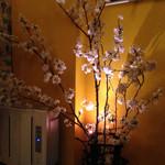 PARADE - 花見の時期に桜を用意してくれる素敵なお店