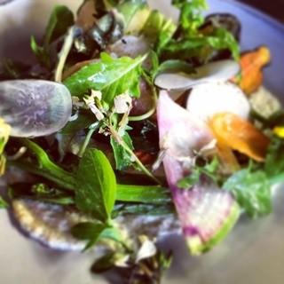 新鮮!鎌倉野菜のサラダ