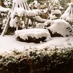 そば処もみじ亭 - 座敷から庭を眺める