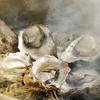 港釧路の炉端焼き 虎や - 料理写真: