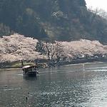 26200167 - テラスから見る桜が美しい。