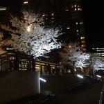 エル・トレス - 夜桜もきれいにライトアップされてます。