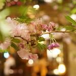 福笑 - 桜が満開の店内(4月)