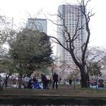 セルジオ ストロベリー - 錦糸公園の桜がきれいでした