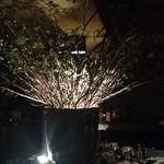 cabarna - 桜の木ですって