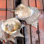 珊瑚礁 - <活サザエの壺焼き>肝の旨みもしっかり味わって下さい。