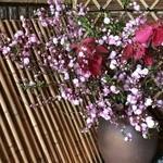 風和里 - 四季折々の花々がお客様をお出迎え♪
