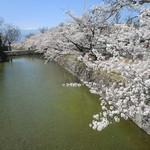 そば屋 五兵衛 - 松本城お濠の桜