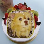 菓子工房 ひのでや - バースデーケーキ(生クリーム5号)似顔絵付