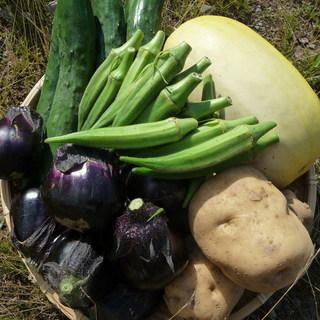 野菜と山菜