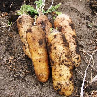 土作りからこだわった野菜たち