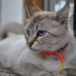 猫ちゃんおもてなしの宿 オーベルゼ レ・ボー - ススちゃん(^^)
