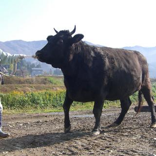 特别飼料牛黒毛ワイン和牛