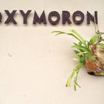 オクシモロン コマチ -