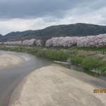 走井餅老舗 - 桜は続くよ、どこまでも!?