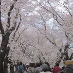 走井餅老舗 - 桜トンネル通過ちう!