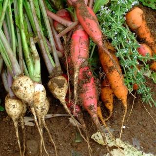 減農薬・無化学肥料栽培の野菜を使用しています!