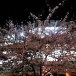 soto - 夜桜がとても綺麗。