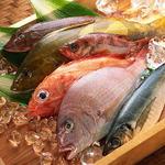 嬉らく人岡場笑店 - 料理写真:明石からの鮮魚