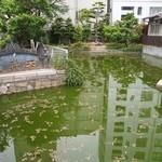 うどん双樹 - 大阪天満宮 祖霊社にある星合の池