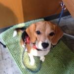 ドッグカフェ プティシアン - 犬マットお借りしました。