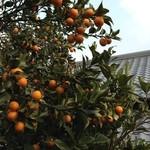 シーズホーム - 実家のオレンジも使用‼