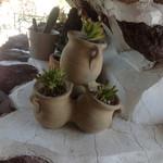 ガーデンカフェドットコム - お庭のサボテン