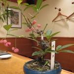 錦 - 「まゆみ」の盆栽