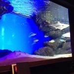 GRAND SHARK -