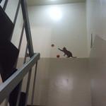猫式 - 猫式 ビル2階から3階に上る階段