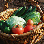 ラパン・アジル - 旬の無農薬野菜