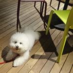 キハチ - カラフルな椅子が素敵〜♬