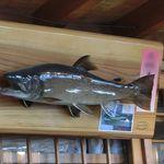 26966003 - 常連さんが釣った岩魚、素晴らしい雄姿