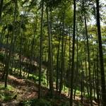 市原タケノコ園 - 美しく手入れされた竹林