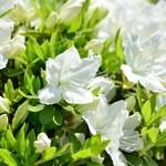 市原タケノコ園 - きれいな花がお出迎え