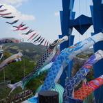 27009518 - 竜神大吊橋と鯉のぼり