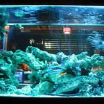 BLUE FISH AQUARIUM - 奇麗
