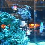 BLUE FISH AQUARIUM - ミノカサゴ
