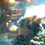 BLUE FISH AQUARIUM - くまのみ