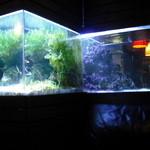 BLUE FISH AQUARIUM -