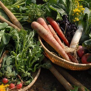 愛情いっぱいの有機野菜
