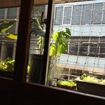 Cafe FLEUR - 窓からの景色  向かいはビルですけど(。 >艸<)