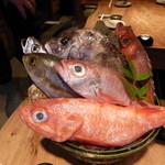 鯛めし 銀家 - まずは料理に使うお魚を選びます