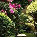 カフェ ゆるり - 5月のお庭