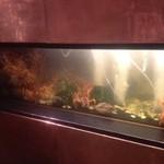 鉄板焼 天 本丸 - 生簀の伊勢海老と鮑