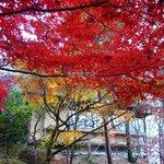 青山亭 - お店の周囲はすばらしい紅葉 - 晩秋の午後