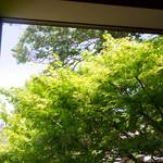 キメラ - <2014.5月>席から見える窓いっぱいのもみじ。