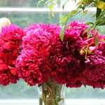Nicolai Bergmann NOMU - 店内は花屋さんだけあって花がいっぱい!